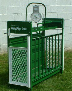 WAYPIG MECHANICAL MARKET HOG SCALE 300LBS. CAPACITY W/ GILT SIDE UNASSEMBLED<br>