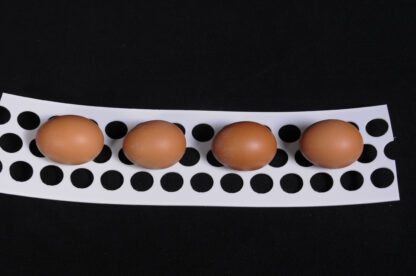 "PERFORATED POLYPROPYLENE EGG BELT 3-3/4"" X 820'"